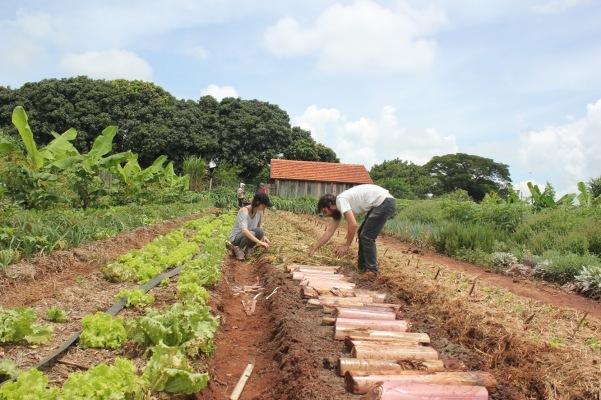 Foto de um Mutirão na plantação em sistema Agroflorestal Terra Planta. @terraplanta